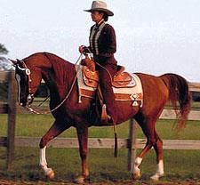 Western-horse-