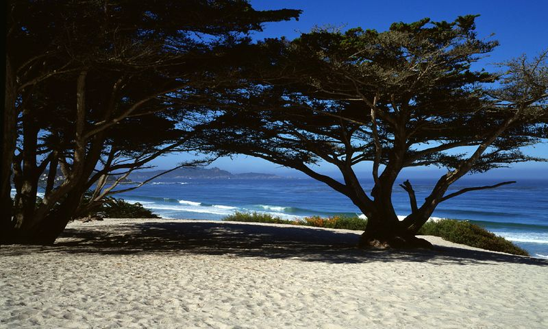 Gallery Sur Carmel Beach Morning 30x50 (2)Gallery Sur