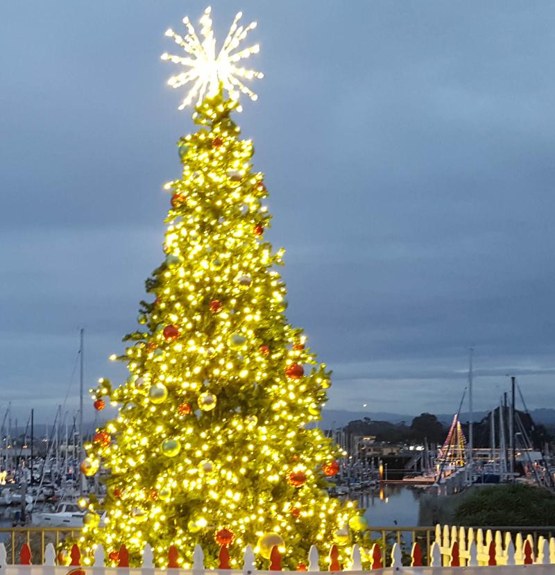 Christmas tree 2016b